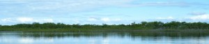mangroves_K.L. McKee